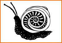 snailth