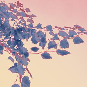 cascadingleaves_violet_sm